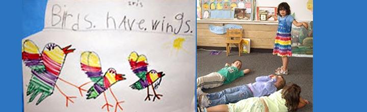 bird study in kindergarten