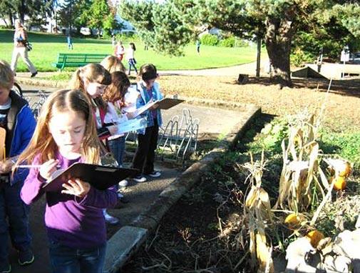 kindergarten science outdoor studies